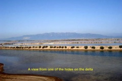 Ebro-Delta-view-from-hide