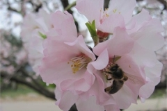 07-Bee-and-Blossom