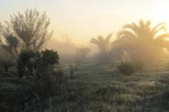 Morning-mist-by-Jean-Miller