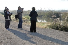 The-twitchers