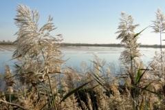 Through-the-reeds