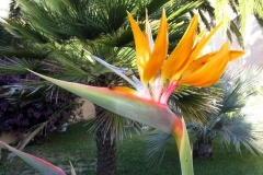 Bird-of-Paradise-Mary-Steenhuis