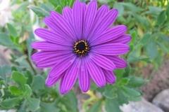 Flower-Mary-Steenhuis
