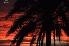 Sunset-2-by-Pat-Robinson